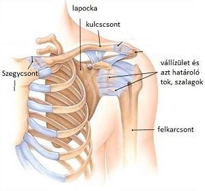 sérülések a vállízület elmozdulása miatt ízületi gyulladás enyhíti az ízületi fájdalmakat