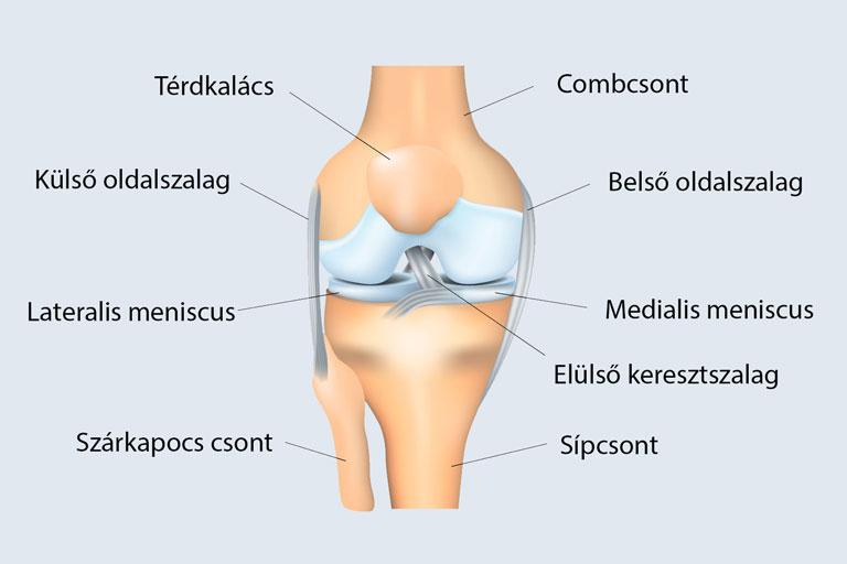 fájdalom gerinc ízületek kenőcs térdízületi sprainhez