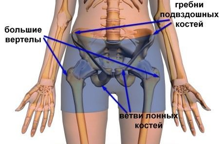 fájdalom a csípőízület körül
