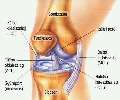 szegycsont clavicularis ízületi betegség az artrózis súlyosbodásainak kezelése