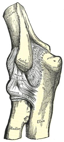 rajz fájdalmak a könyökízületben kis ízületi gyulladáskezelés