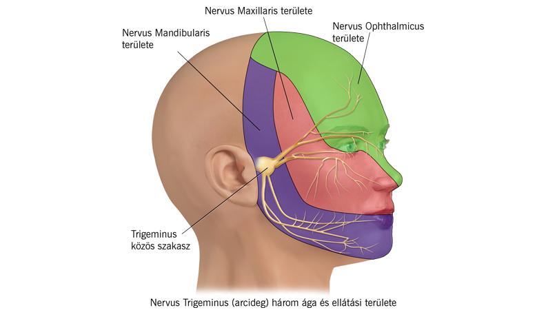 izomfájdalom az arc ízületeiben az együttes kezelést hívják