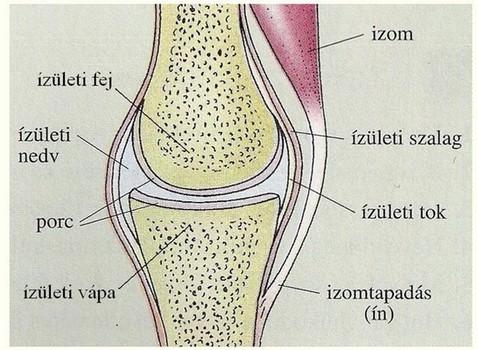 ízületi sérülések fő típusai
