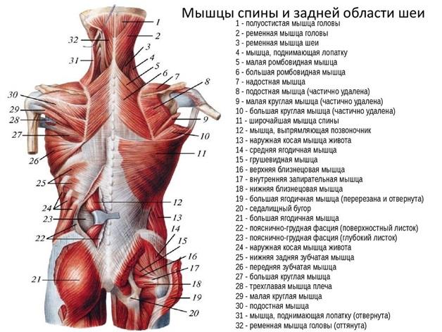 gerincízületek íveinek ízületi gyulladása