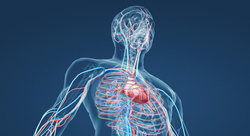 vérkeringési készítmények osteochondrosishoz