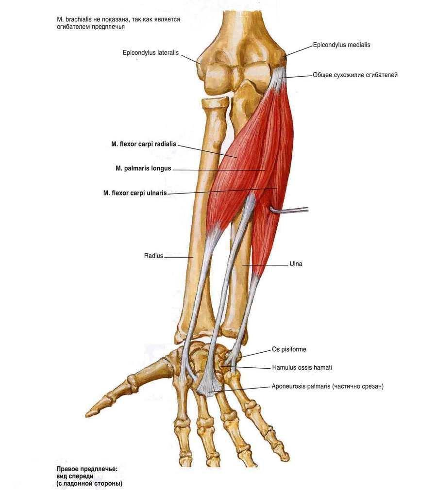 hidrokortizon kenőcs az artrózis kezelésében izületi gyogyszerek