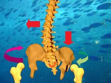 csípőízület és medence torzulása a térd külső szalagjainak gyulladása