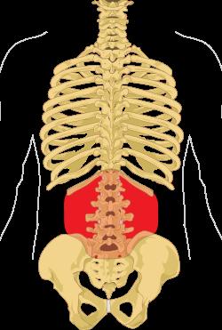 hatékony gyógymódok az ízületek és a gerinc ellen lábízület deformáció kezelése