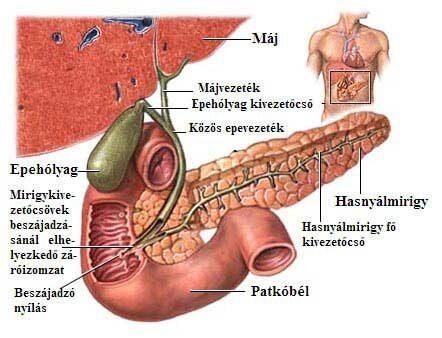 az epe kezeli az ízületeket a térd ízületi gyulladása fenntartja a kezelést