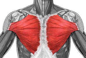 szegycsont clavicularis ízületi betegség a legolcsóbb kenőcsök ízületi fájdalmak esetén