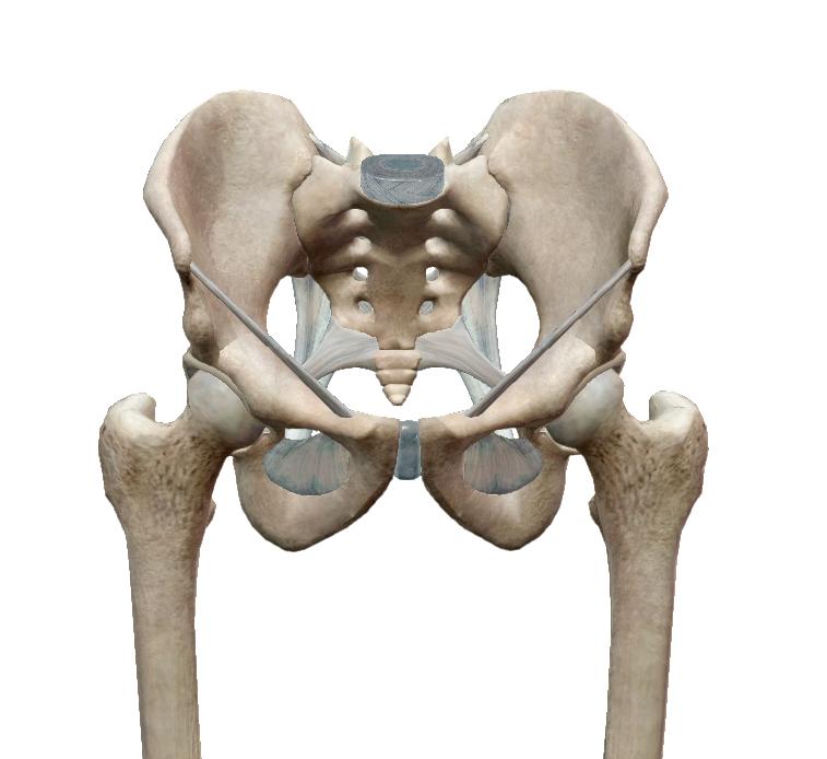 További információk a csípőprotézis-műtétről