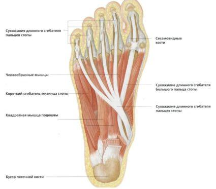 Lábfej deformációk: lúdtalp, hallux valgus, lapos vagy magas lábboltozat