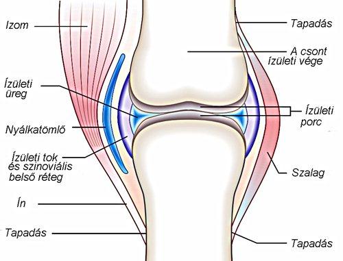 ujjak és izmok ízületi fájdalmai súlyos fájdalom a térdízületi meniszkuszban