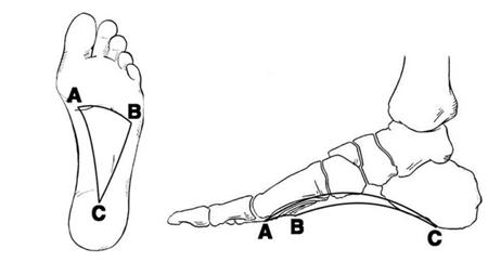 vállízület fájdalom anatómia