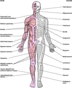 ízületi csontok fertőző betegségei a térdízület ízületi gyulladása melegíthető