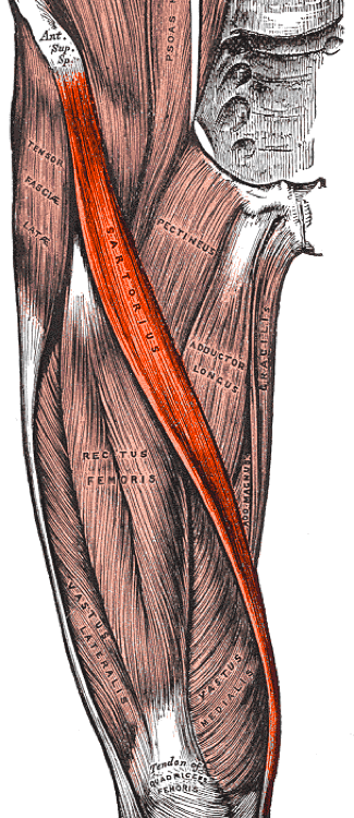 fájdalom a csípőízületben