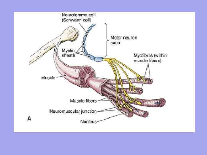 a csípőízület a zsineg után fáj