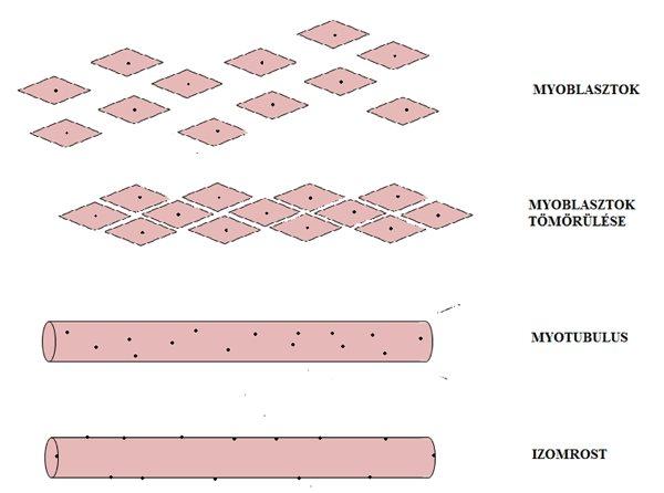 térdízületek ízületi fájdalma ízületi kezelés radonnal