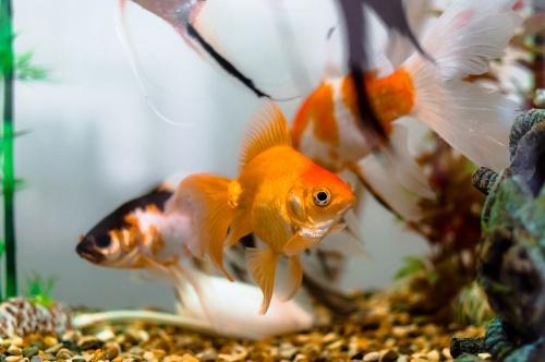 közös kezelés friss halakkal hatékony gyógyszer a térd ízületi gyulladásról
