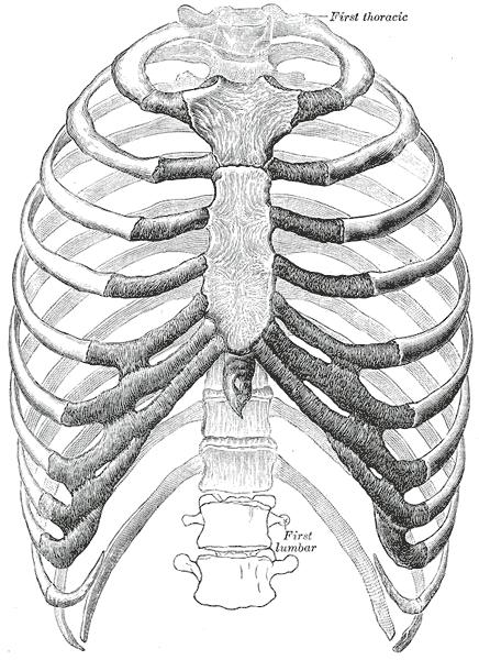 szegycsont clavicularis ízületi betegség fájó fájdalom a gerincben és az ízületekben