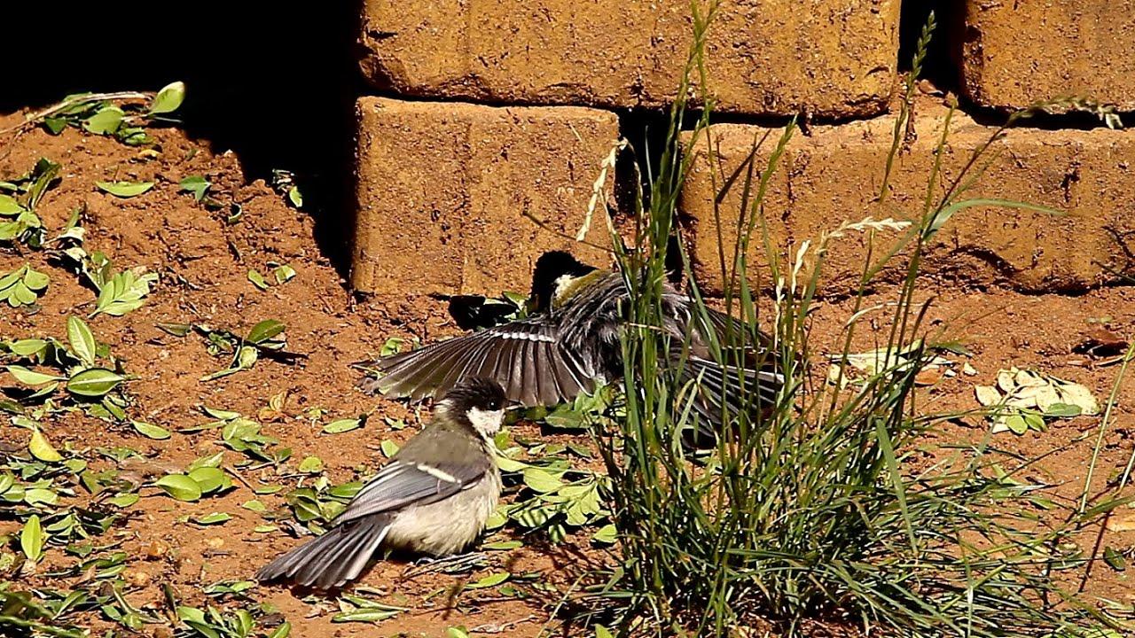 a madarak lábainak ízületei sérülései