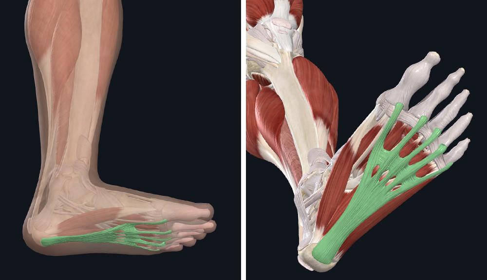 hűtve korodetsky ízületi betegségek a lábak ízületeinek periarthritis kezelése