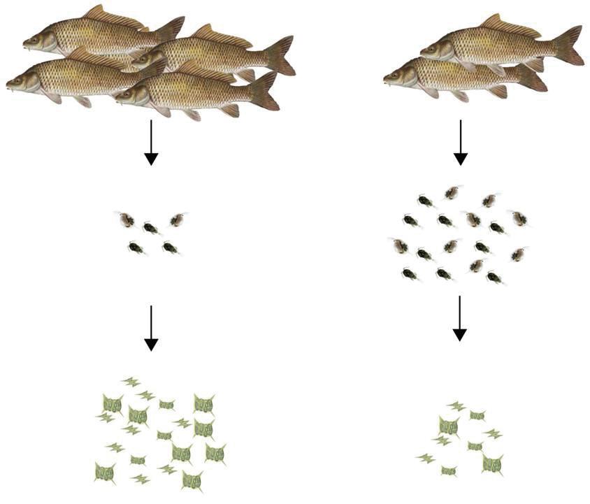 közös kezelés friss halakkal hogyan kell kezelni a kéz ízületét
