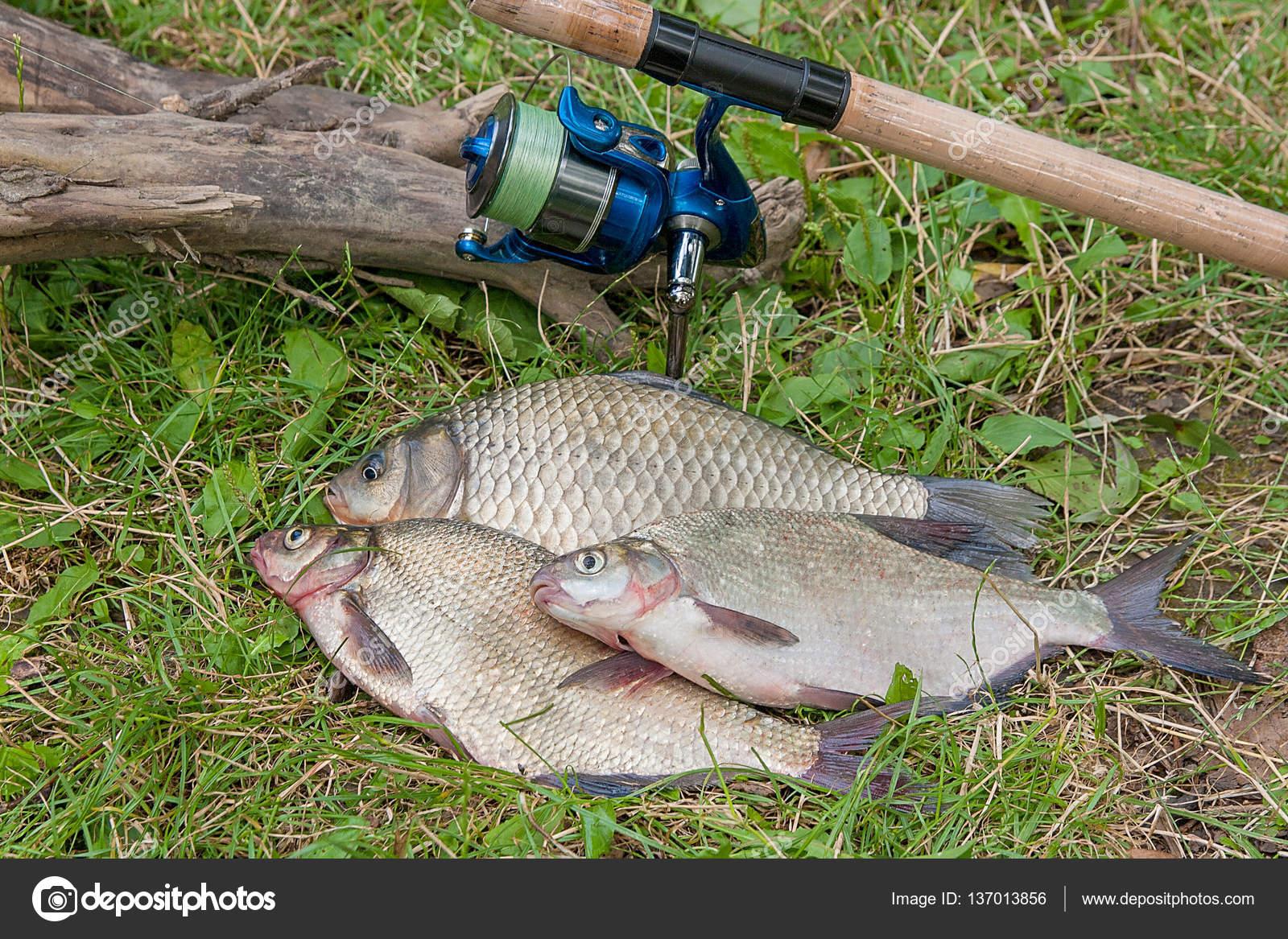 közös kezelés friss halakkal vásároljon folyékony glükozamint kondroitinnel