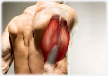 Felső hátfájás & Hasi fájdalom & Karfájdalom: okok – Symptoma