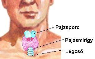 pajzsmirigy izületi fájdalom lehet meghalni ízületi betegségben