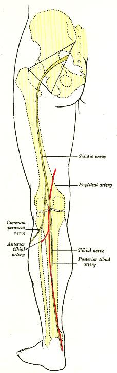 poplitealis ligamentum-töréskezelés a térd deformáló artrózisa 2-3 fokos kezelés