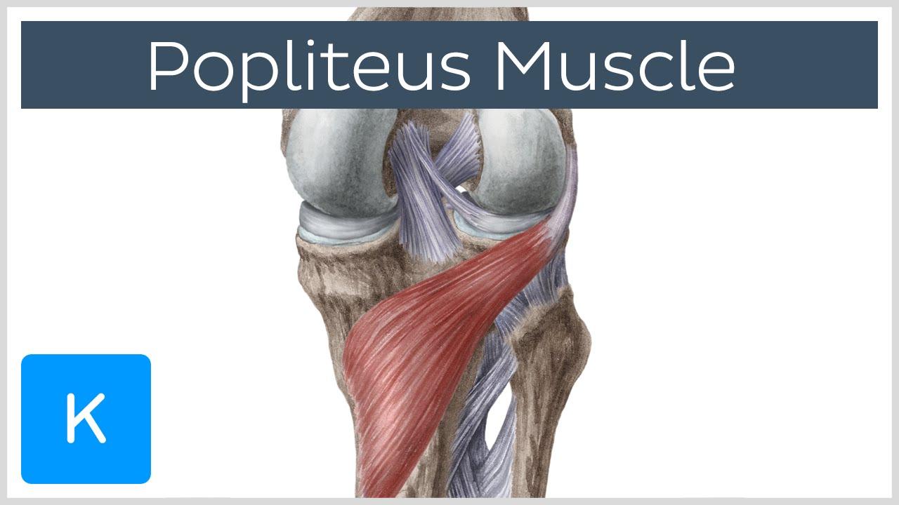 poplitealis ligamentum-töréskezelés