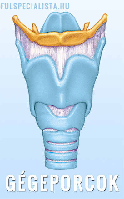 omegashark krem na stawy hogyan kezeljük a lábujj rheumatoid arthritisét