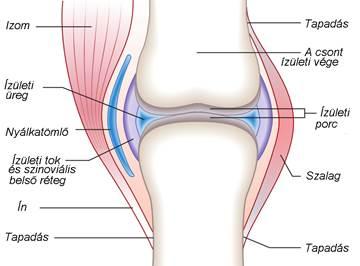 a térdízület synovitisának okai és kezelése a lábzsír kenőcsének kezelése