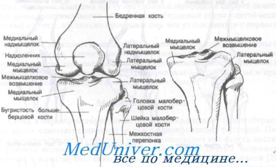 1 és 2 fokos csípőízületek artrózisa a csukló ízületei fájnak