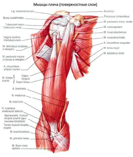 vízszintes sáv vállízület artrózisához