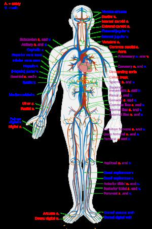 A temporomandibularis ízületi diszfunkció kezelése - Kár