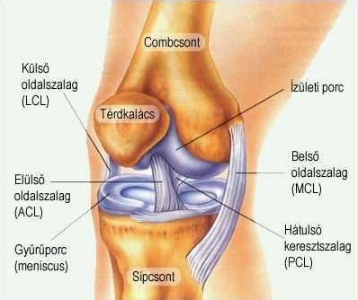 az ízület artrózisának kezdeti stádiuma